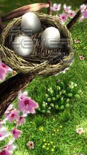 Spring Zen HD - живые обои для ANDROID