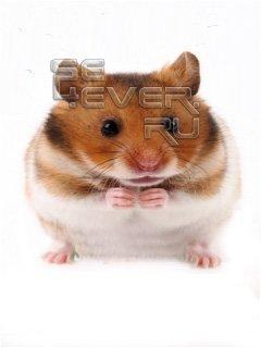 Talking Hamster v.0.09