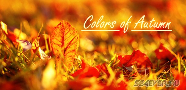 Colors of Autumn Live Wallpaper - ������ ����� ����� ����