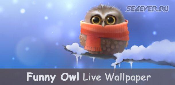 Funny Owl - ����� ����